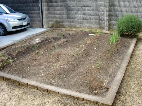 菜園施工事例3
