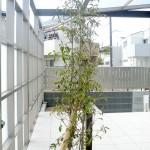 シンブルツリーは常緑ヤマボウシ。Gルーフには日除けカーテン付き。
