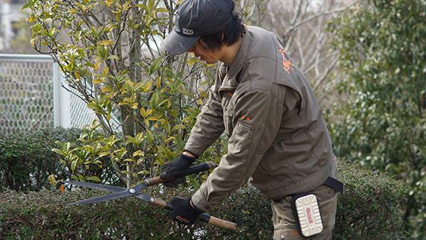 植木の剪定は計画的に! 植え付ける前に決めるべきこと