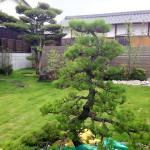 このお庭のシンボル!お手入れはO様自身が行います。