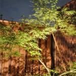お庭部分は1ヶ所スポットライトで 浴室から見えるモミジにもスポットライトを