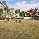 広い芝生を走り回る愛犬たち