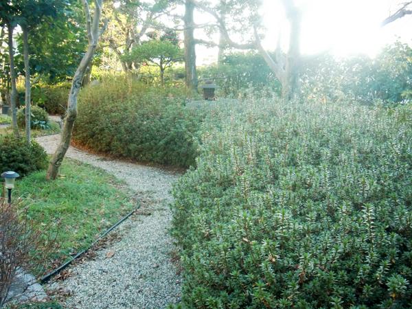 曲線が美しいサツキメインの庭園【剪定】-大阪府吹田市I様邸の施工前