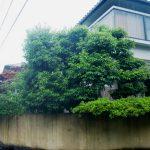 施工前:樹木が生い茂り防犯上もよくありません