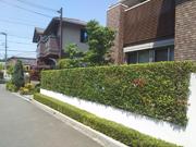 直線が綺麗なプリペットの生垣-大阪府豊中市F様邸の詳細はこちら