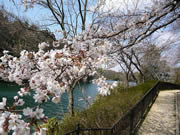 「大阪庭みて歩記」 2009オススメ桜スポット編