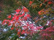 「大阪庭みて歩記」 2010オススメ紅葉スポット編