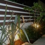 植栽(夜)