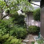 施工前:植栽が茂り、庭部分が見えていません
