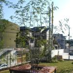 シンボルツリーとベンチ
