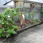 雑然とした以前の花壇