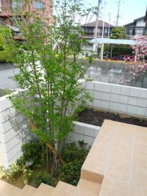 シンボルツリーのヤマボウシ