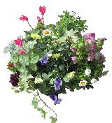 春の寄せ植え講習を開催します!