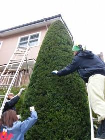 樹木を傷めないよう、やさしく作業