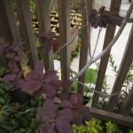 スモークツリーなど、洋と和の調和を植物で