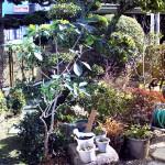 リフォーム前:雑然としたお庭