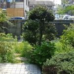 玄関前も植栽を楽しめる場所に変わりました