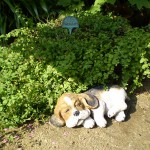 お庭を陶器の犬がお迎え