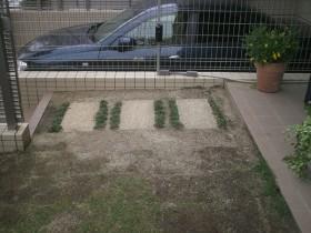 芝生が育たない寂しい雰囲気の中庭