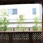 リビングから続く素敵なウッドデッキの先には涼しさも感じさせるシマトネリコ株立ちを植栽♪