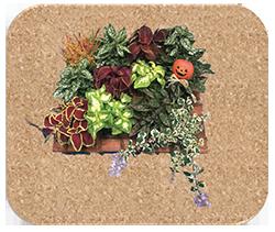 アートフレーム作品例(写真はイメージです。植物の種類は市場状況により決まります)