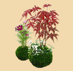 コケ玉 作品例(写真はイメージです。植物の種類は市場状況により決まります)
