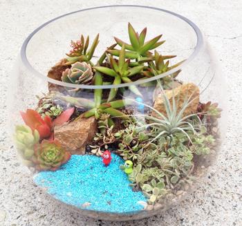 テラリウム作品例(写真はイメージです植物の種類は市場状況により決まります)