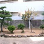 施工後:高木の足元は土の状態で残しました。