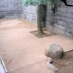 施工後:もう一つの裏庭です。
