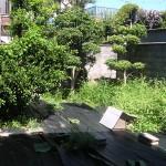 施工前:裏庭部分です。雑草撤去大変でした。