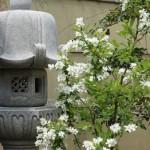 F様のご両親自ら香川県に足を運び、探し出された庵治石の灯篭です。白い花のリキュウバイが灯篭を引きたてます。