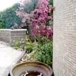 水鉢に落ちる桜の花びら