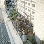 門柱前には、花壇から続くゴロタ石を配置。 外構全体の一体感にも一役買っています。