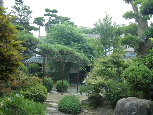 代々受け継がれる庭の中心にある松【剪定】-大阪府豊中市K様邸の施工前