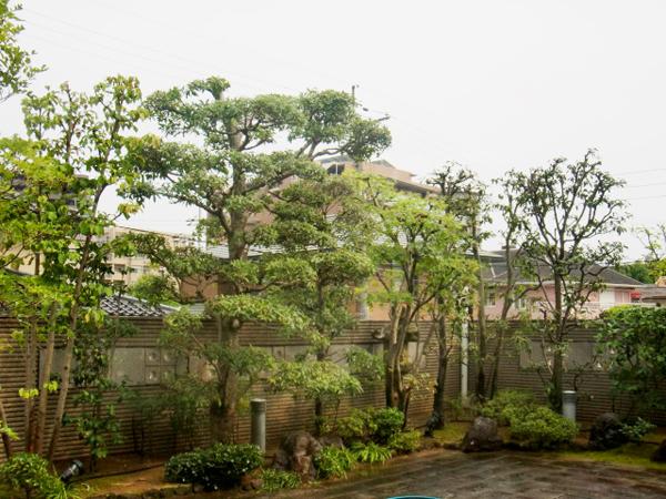 四季折々の季節感を感じる庭【剪定】-大阪府豊中市U様邸