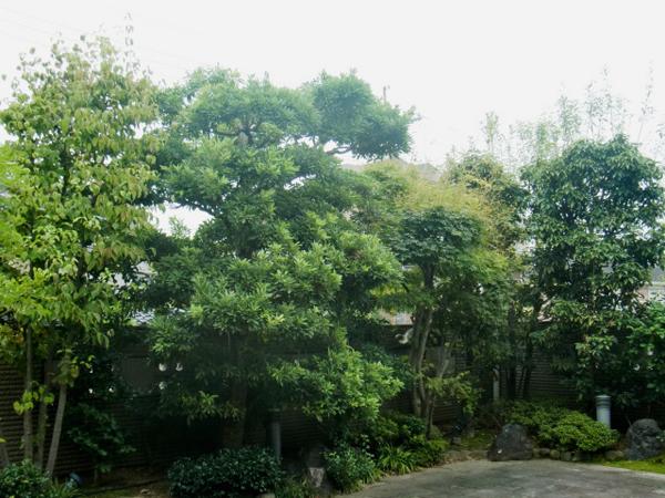 四季折々の季節感を感じる庭【剪定】-大阪府豊中市U様邸の施工前