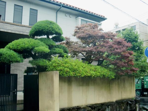 門かつぎのマキ【剪定】-大阪府豊中市O様邸の施工前
