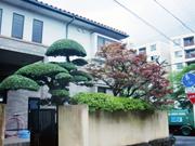 門かつぎのマキ【剪定】-大阪府豊中市O様邸の詳細はこちら