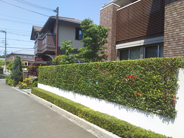 直線が綺麗なプリペットの生垣-大阪府豊中市F様邸