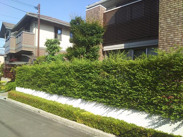 直線が綺麗なプリペットの生垣-大阪府豊中市F様邸の施工前