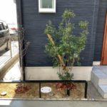 株立ちのハイノキは樹形にこだわって選びました