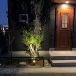 【夜景】スポットライトでハイノキをライトアップ!