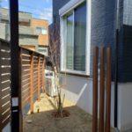 窓から見えるようにイロハモミジを植えました