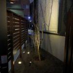 【夜景】ソーラーライトでイロハモミジを明るく照らします