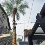 擁壁前の空間にはフェニックスロベレニーをワイヤー支柱で施工しました。