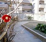 野菜作りを楽しむ庭~豊中市 F様邸の詳細はこちら