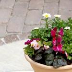 お庭の中心で寄せ植えが際立ちます