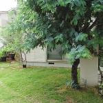 施工前:地植えしたミモザが成長し、玄関前が暗くなっていました