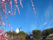 万博記念公園 ~日本庭園と梅まつり編の詳細はこちら