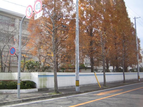 施工前:メタセコイア並木は立派でしたが、生徒の安全の為に駐車場スペースに
